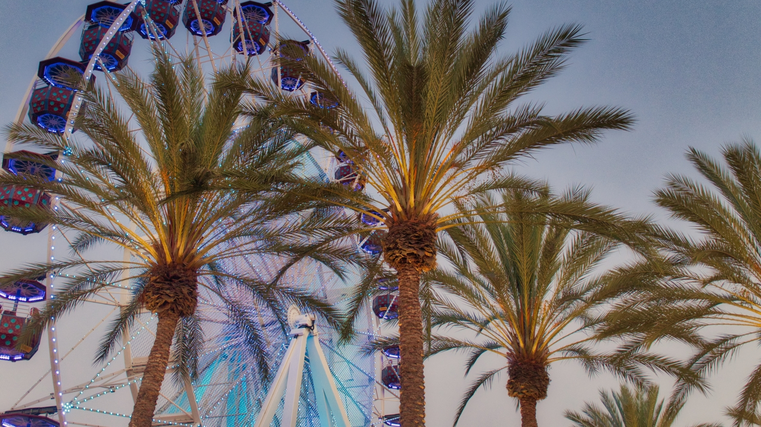 Palm trees with Ferris wheel
